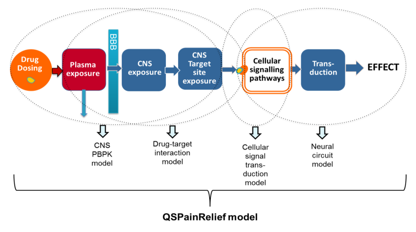 QSPainrelief model